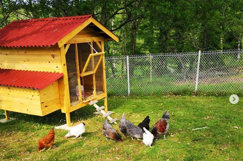 le poulailler avec nos jolies poules